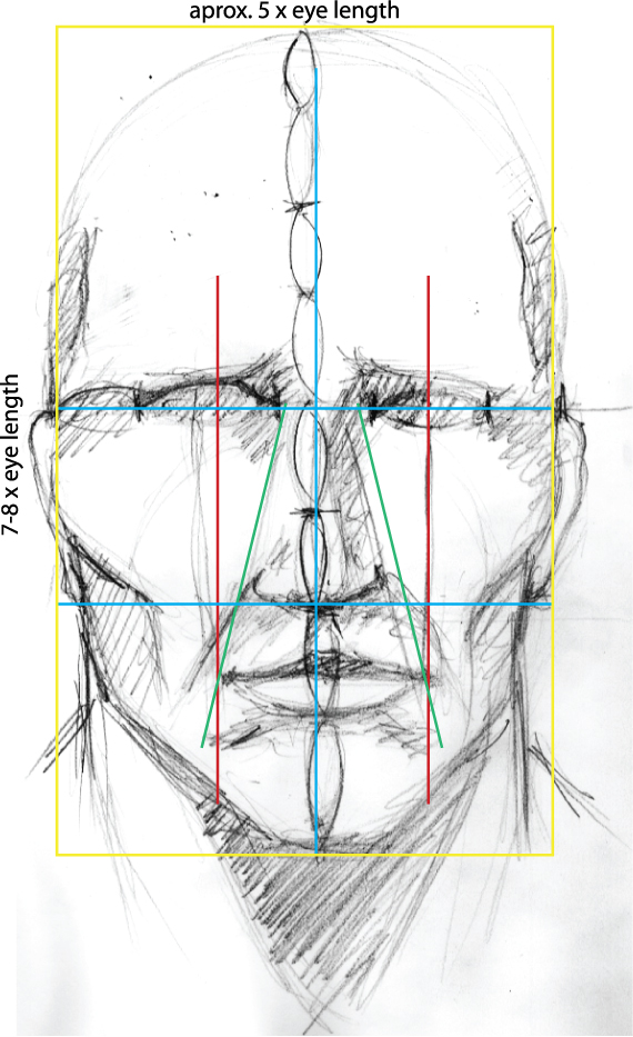 Drawing Vector Portraits Part 1 The Facial Structure