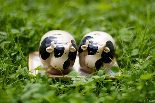 spotted cows salt and pepper shaker design 35+ Creative and Funny Salt and Pepper Shakers