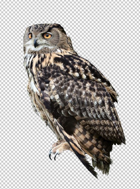 3.1 pixel 77 owl poster tutorial Design Process: How to create a movie poster with Photoshop and Paint Tool SAI