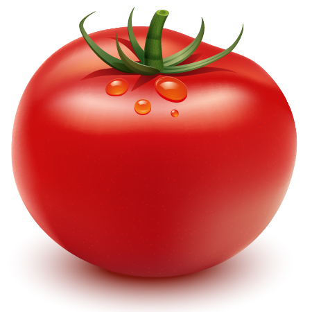 how to create a tomato in illustrator Top 20 Vector Tutorials for Beginners and Advanced Designers