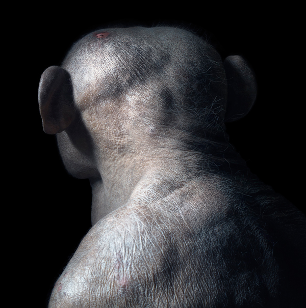 0004 Jambo Head copy More Than Human Book and Exhibition by Renowned Photographer Tim Flach