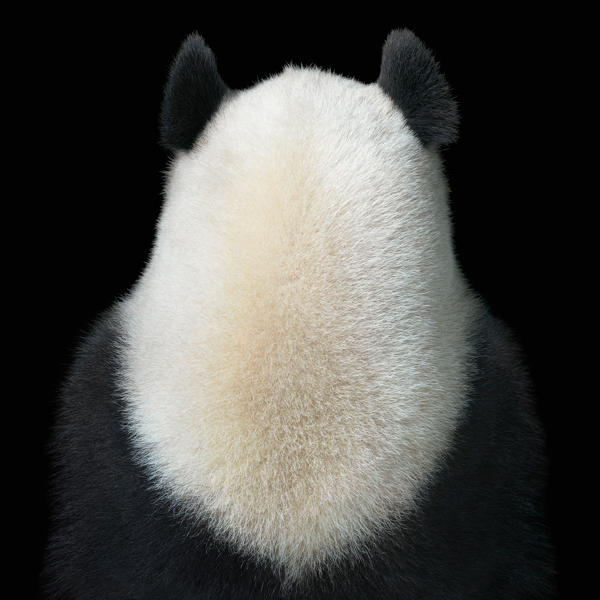 0020 Panda Back copy More Than Human Book and Exhibition by Renowned Photographer Tim Flach