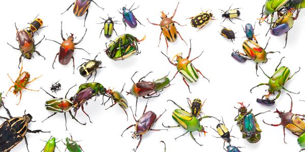 0067 Coloured beetles flat copy More Than Human Book and Exhibition by Renowned Photographer Tim Flach