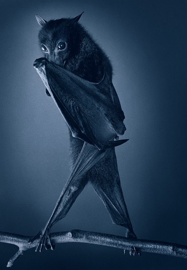 0080 Opera Bat copy More Than Human Book and Exhibition by Renowned Photographer Tim Flach