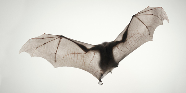 0084 Monkey Bat copy More Than Human Book and Exhibition by Renowned Photographer Tim Flach