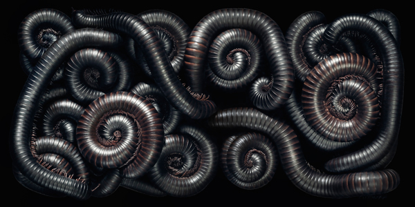 0088 Millipede DPS copy More Than Human Book and Exhibition by Renowned Photographer Tim Flach