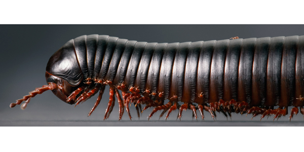 0089 Millipede Train new F copy More Than Human Book and Exhibition by Renowned Photographer Tim Flach