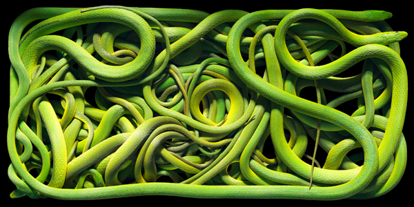 0091 Green Snakes copy More Than Human Book and Exhibition by Renowned Photographer Tim Flach