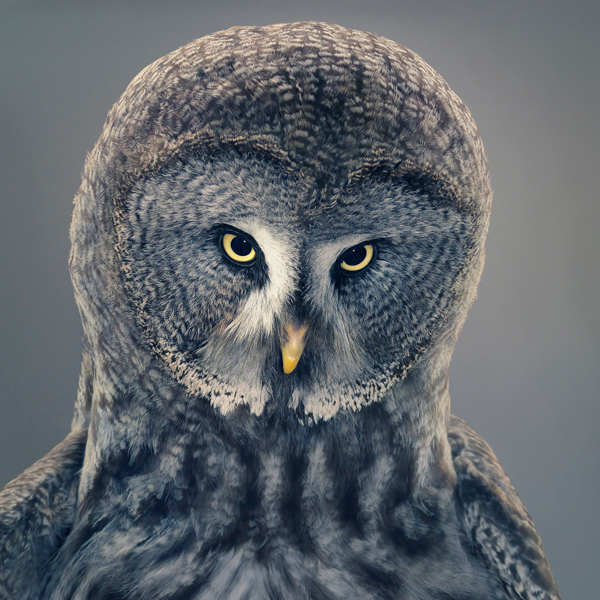 0107 Grace copy More Than Human Book and Exhibition by Renowned Photographer Tim Flach