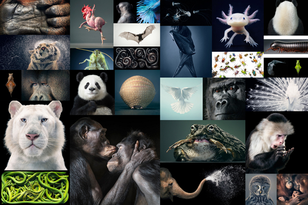 Tim Flach Photography More Than Human More Than Human Book and Exhibition by Renowned Photographer Tim Flach